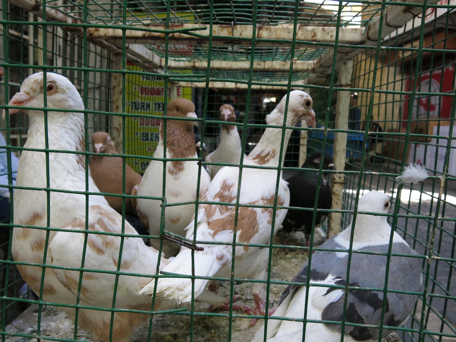 Kuşçu Pazarı Esnafı Sosyal Mesafeye Dikkat Ediyor