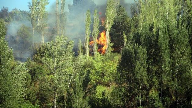 Tokat'ta orman yangını