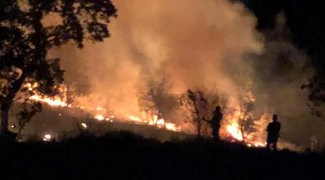 Aydın'da dün çıkan orman yangını kontrol altına alındı