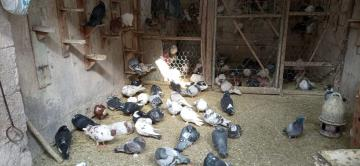 Kuşçu pazarı pandemiden yana dertli..