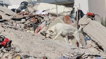 Hayat kurtaran köpekler, arama kurtarma ekiplerinin sağ kolu